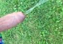 Minha mangueira aguando a grama